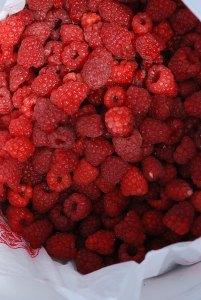 R_berries